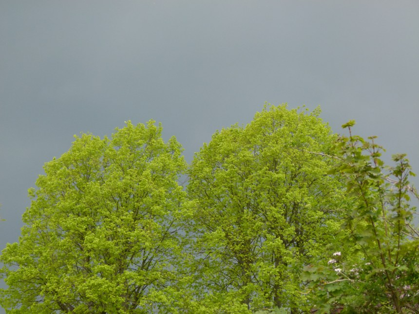 Fresh green leaves and stormy clouds