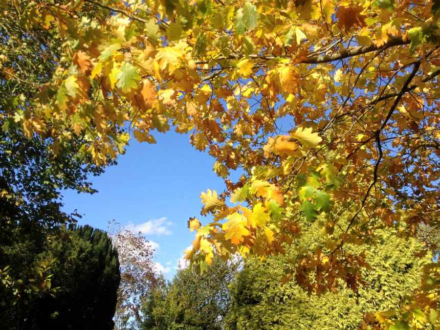 Sky window in the leaves