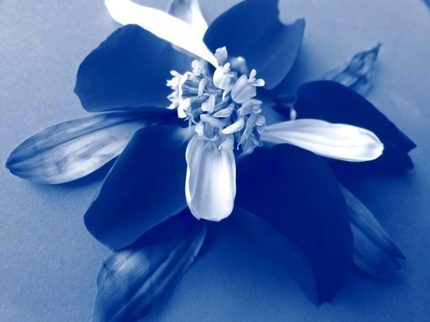 Petal arrangement blue 2 low res