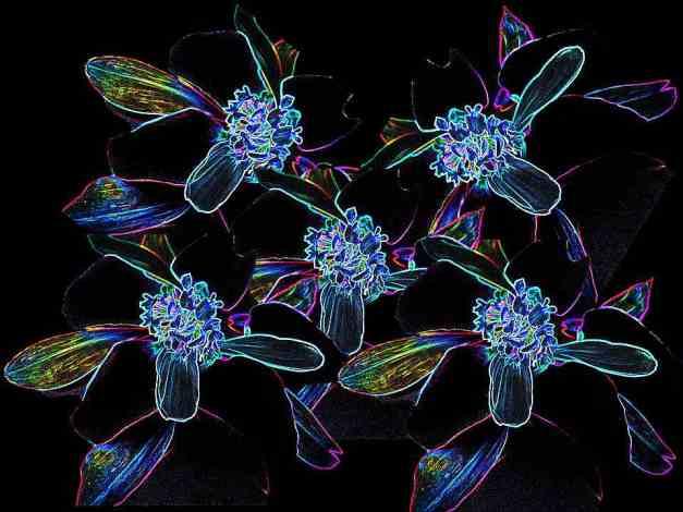 Petal arrangement outline colour low res