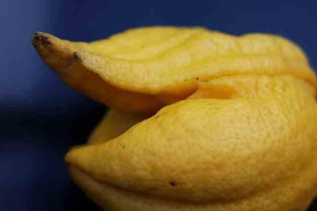 Lemon weird 2 low res