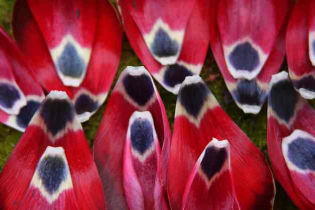 Tulip petal art 1 low res