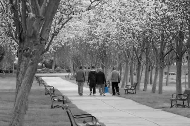 Blossom Avenue 4 low res