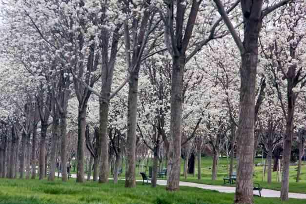 Blossom Avenue 8 low res