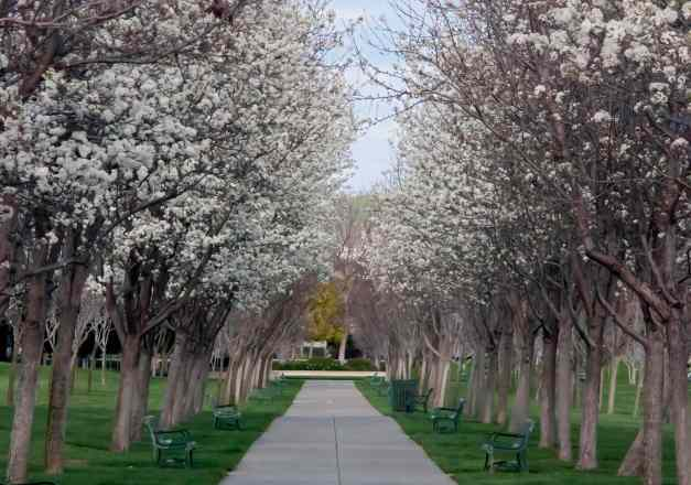 Blossom Avenue central low res