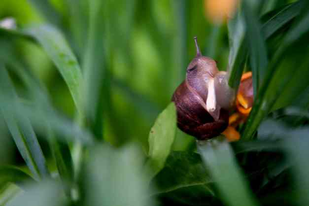 Snail snack low res