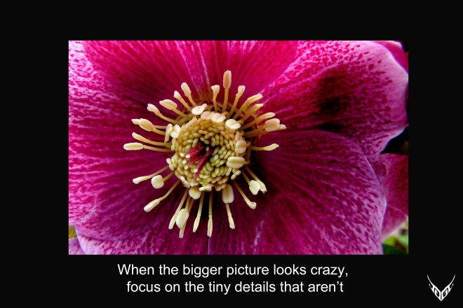 Big pic quote