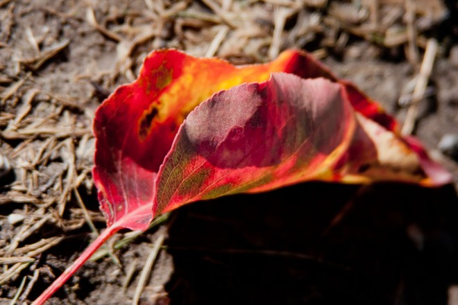 Leaf autumn 2