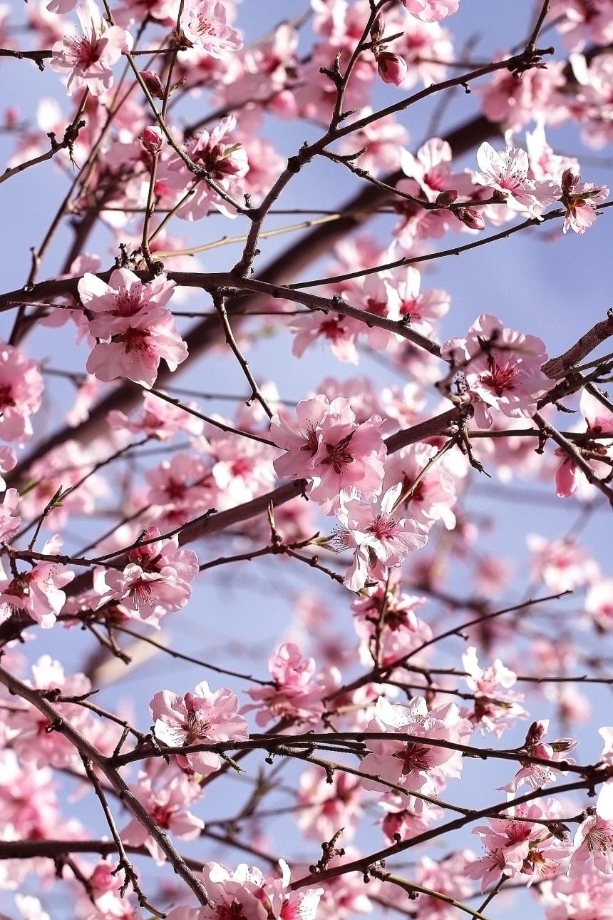 Blossom profusion