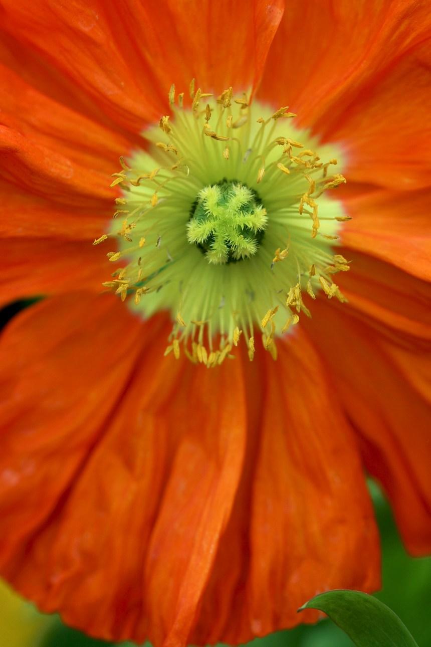 Poppy central