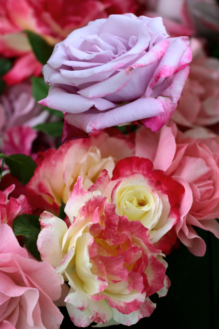 Bucket of Roses 4