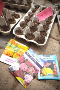 Grow Seeds Indoors With Kids | Frugal Fun Mom