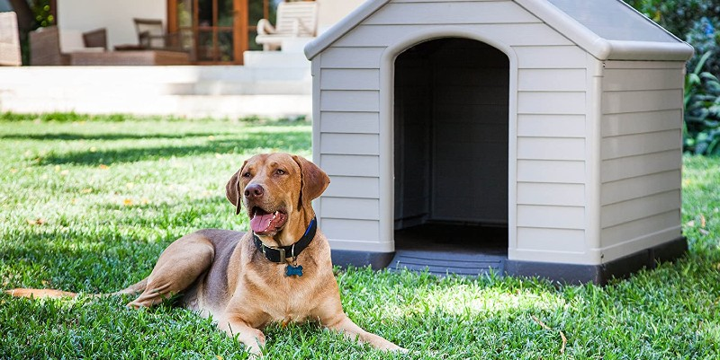 best dog kennels compared including wood and plastic models