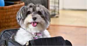 Top 8 Best soft dog crate