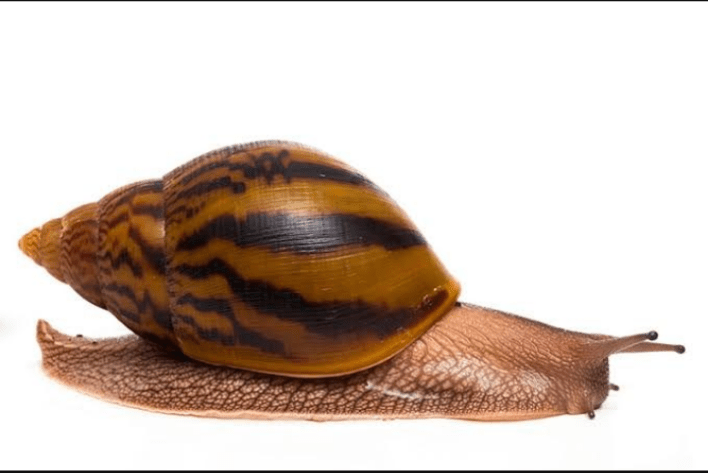 How to Start a Snail Farm in Nigeria and Make Money From It