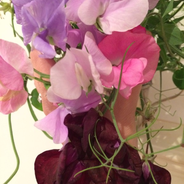 sweet peas from my mother's garden