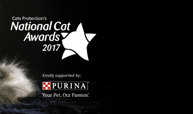 Genie crowned as UK's top cat in Cats Protection's National Cat Awards 1