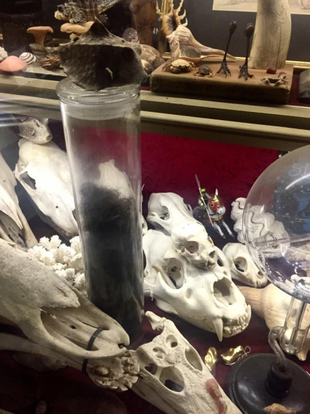 Museum Of Withcraft & Magic