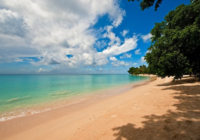 Celebrate world earth day in barbados.