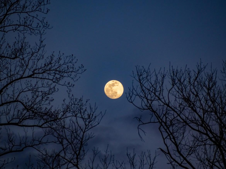 Elayce moon