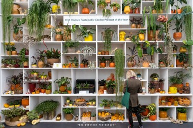 Rhs chelsea flower show 2021 fun and fascinating facts & stats! (2)