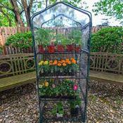 Amazon: 4 Tier Mini Greenhouse $25.11 (Reg. $59.99) + Free Shipping