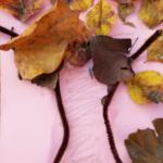 Fall Leaf Tree Craft for Toddlers
