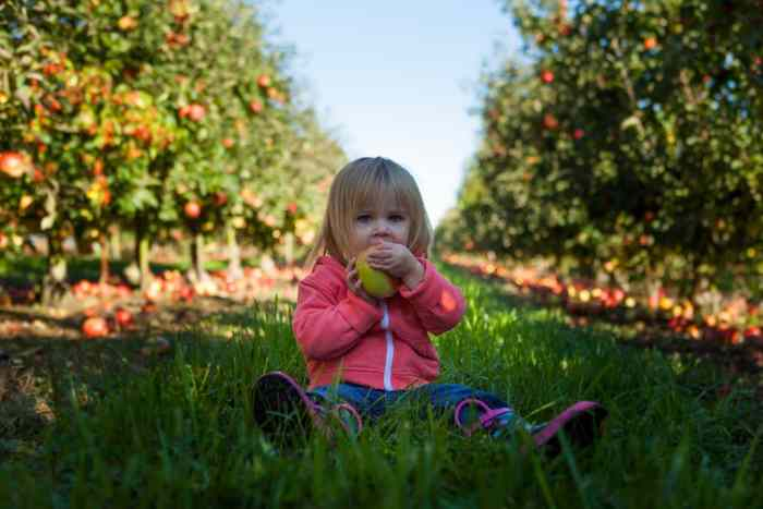 Baby-Led Weaning, what is it and should you try it?