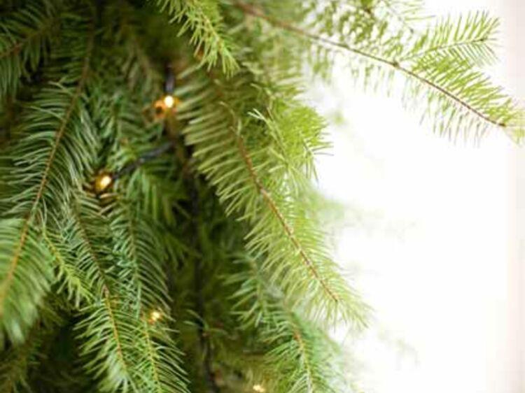 Recycler Le Sapin De Noël Chez Ikéa Recycler Et Valoriser