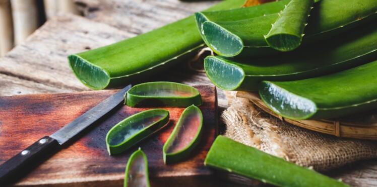 Aloe vera : pourquoi ses feuilles fraîches peuvent être ...