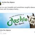 Archie the Alpaca