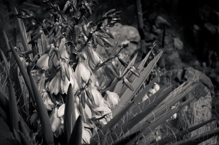Flowers from Thorns Mono
