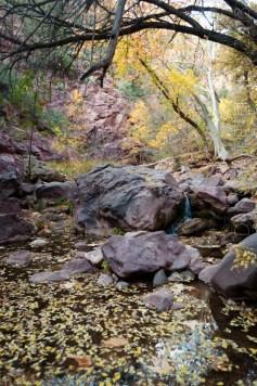 Autumn Stream Vert