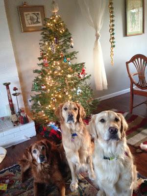 Cindy's Dogs and Christmas Tree