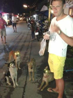 Ya think there's a little dog population problem in Thailand?