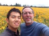 Field of poppies in Salem