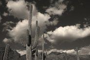 pontatoc-canyon-saguaro