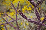 Cholla and wildflowers