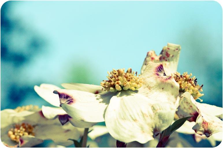 Spring, As Told Through Photographs (2/6)