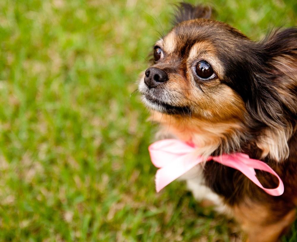Pet Photography (1/6)