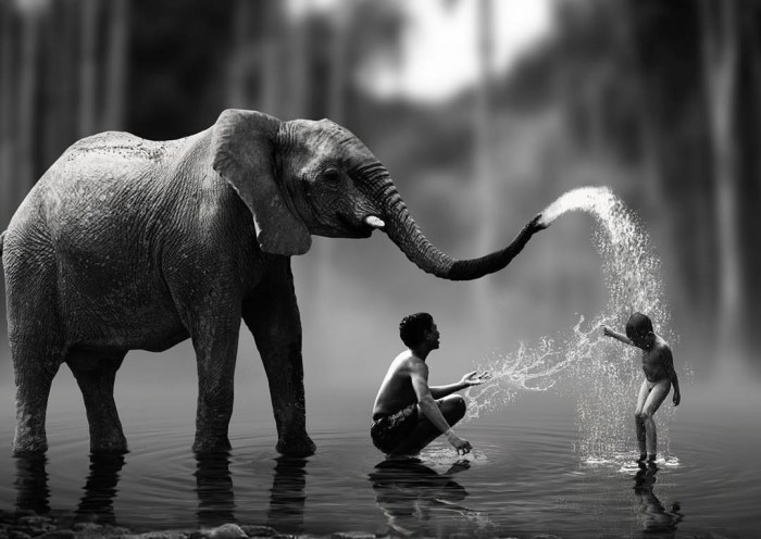 Elephant splashing water