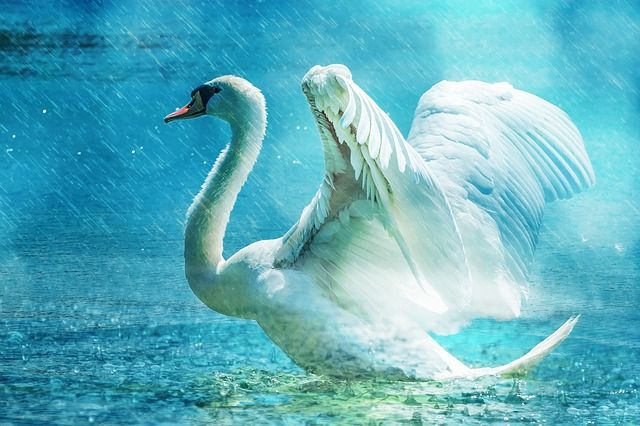 हंस के बारे में 25 रोचक जानकारी – About Swan in Hindi