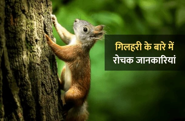 गिलहरी के बारे में 30 रोचक जानकारी – Information About Squirrel In Hindi