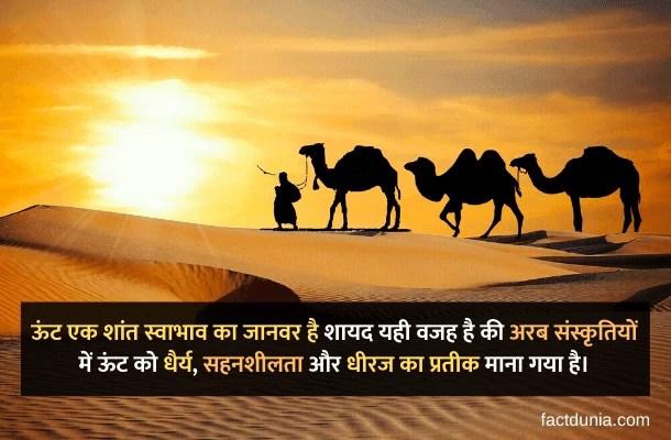 camel information in hindi