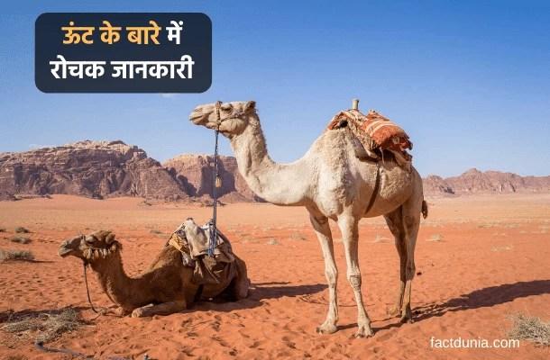 ऊंट के बारे में 35 दिलचस्प जानकारी Information About Camel in Hindi