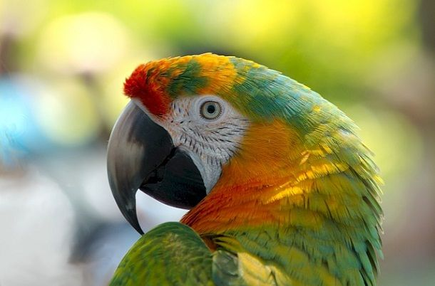 तोते के बारे में 30 रोचक जानकारी – Information About Parrot in Hindi