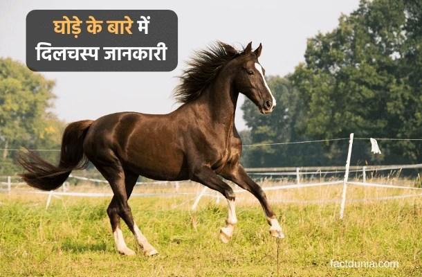 घोड़े के बारे में 40 दिलचस्प जानकारी – Information About Horse in Hindi