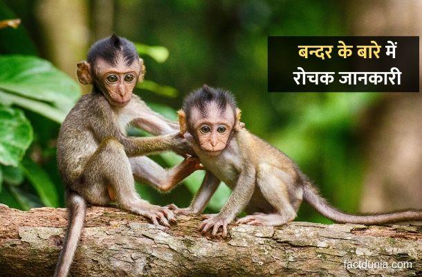 बंदर के बारे में 32 रोचक जानकारी – Information About Monkey in Hindi