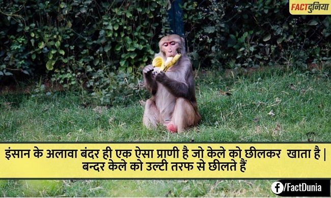 facts about monkey in hindi - बन्दर के बारे में जानकारी