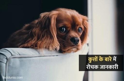 कुत्ते के बारे में 35 रोचक जानकारी – Essay & Information About Dogs in Hindi
